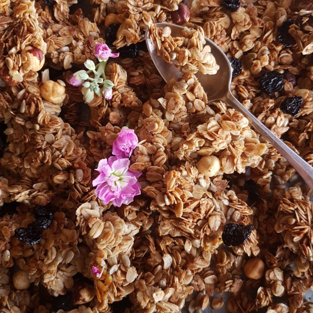 Winter Gingerbread Cherry Granola
